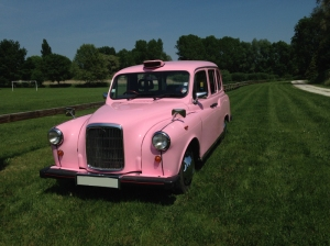taxy rose pink lady